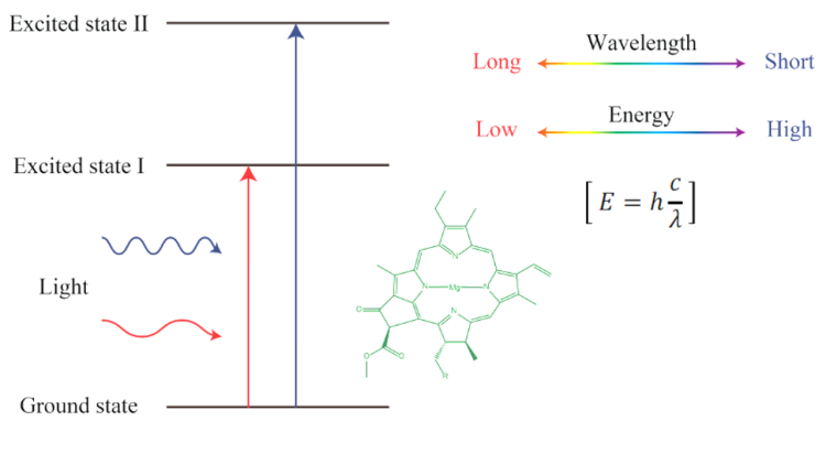 excitation of chlorophyll