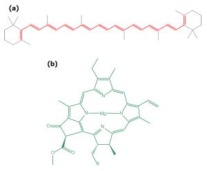 struktur molekul beta karoten dan klorofil